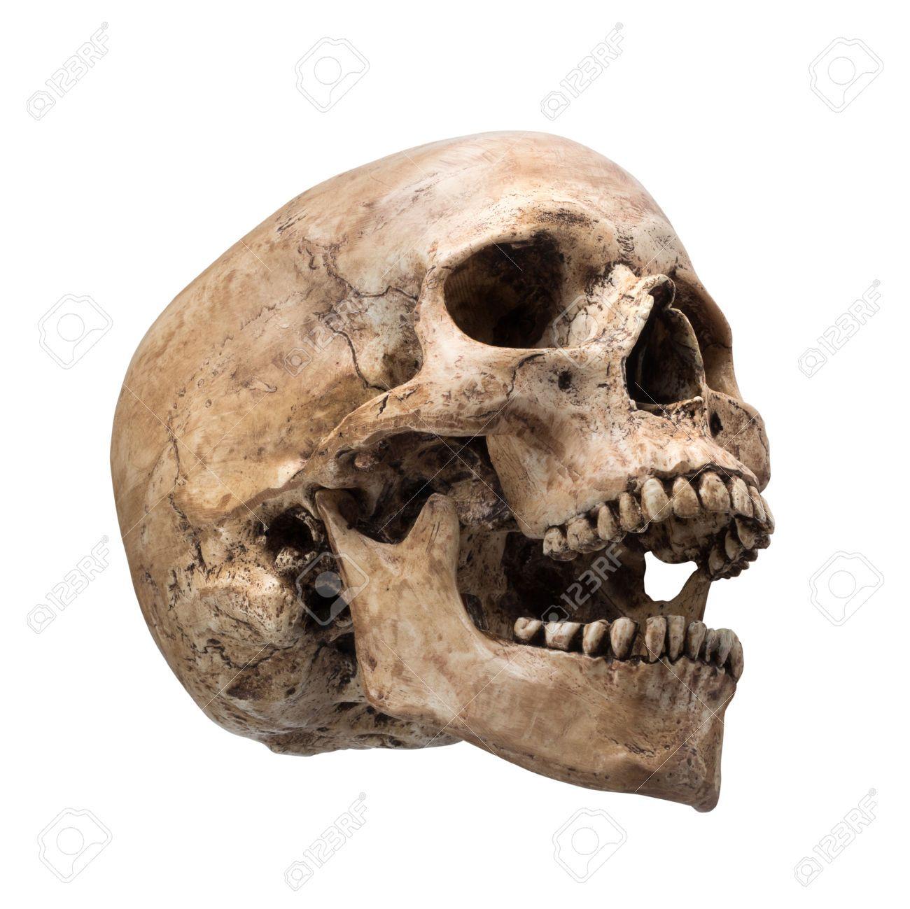 Skull Side View Drawing At Getdrawings