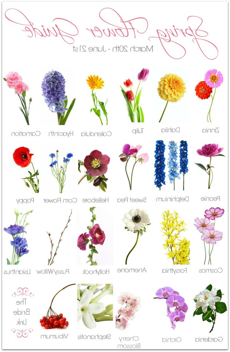 Different Kinds Flowers Philippines And Their Names