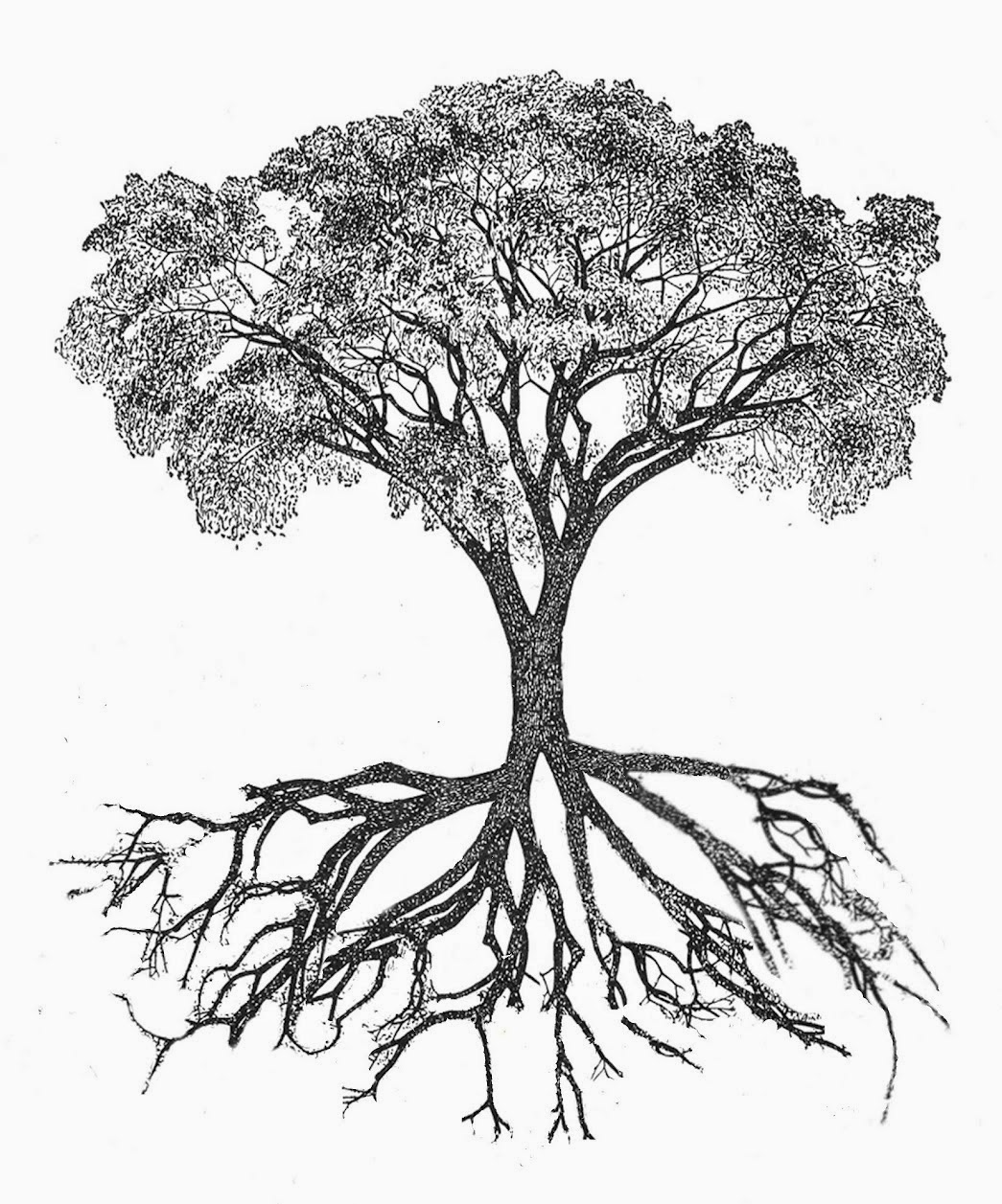 African Tree Drawing At Getdrawings