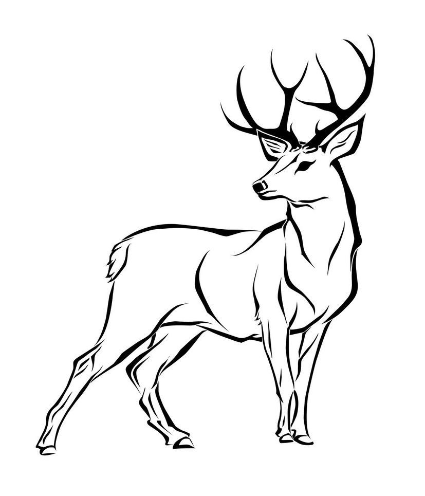 Antler Drawing At Free For Personal Use