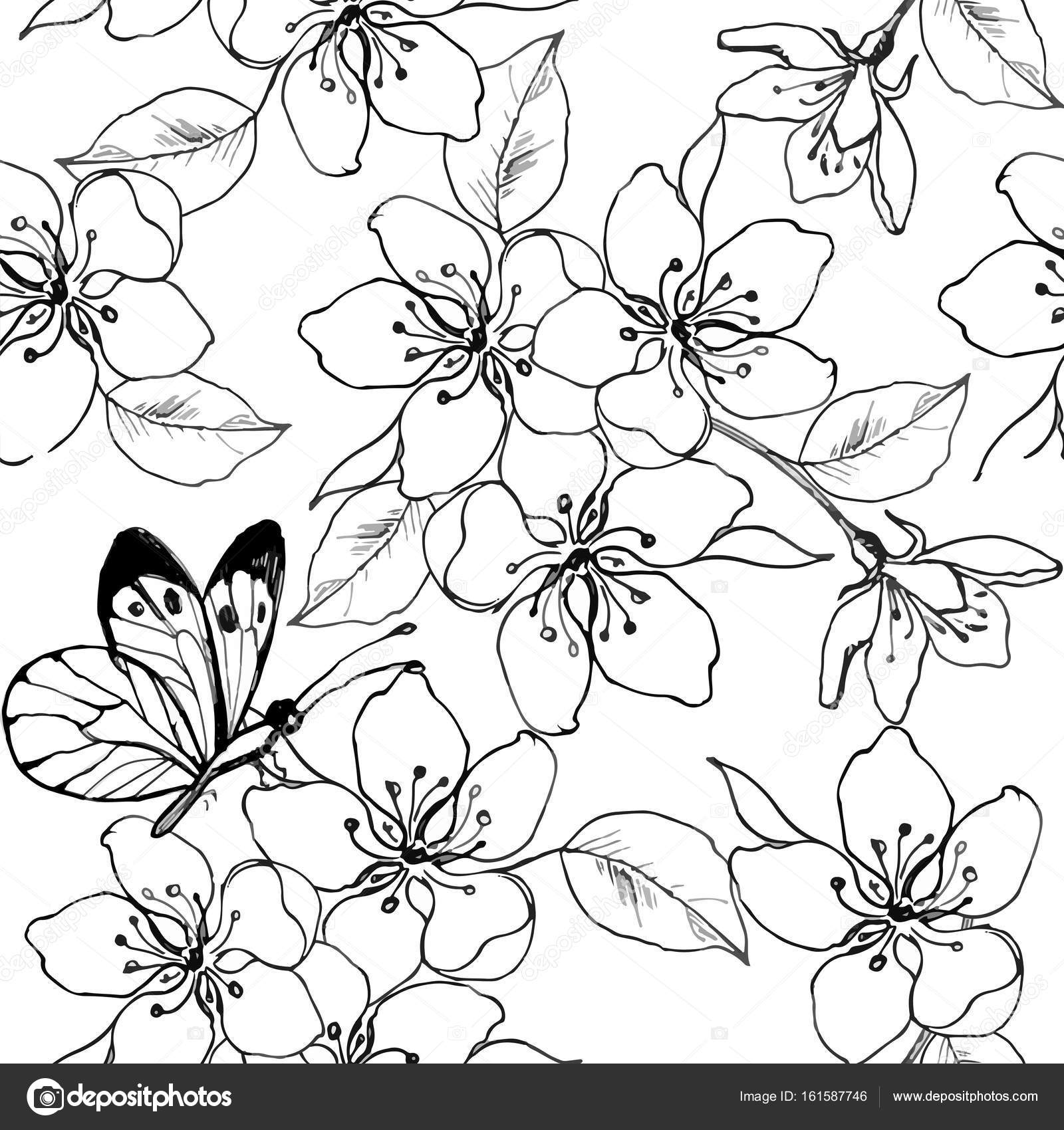 Apple Blossom Line Drawing At Getdrawings