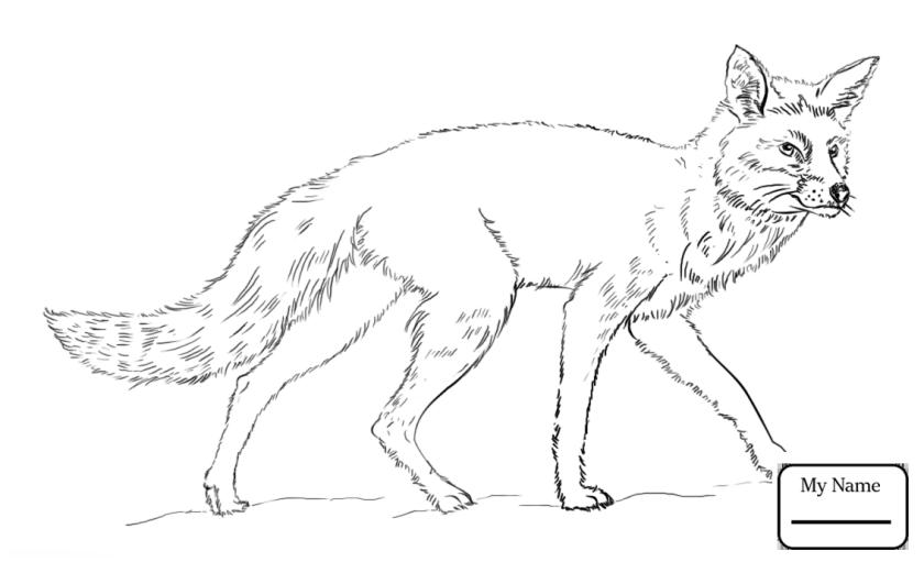 arctic fox drawing at getdrawings  free download