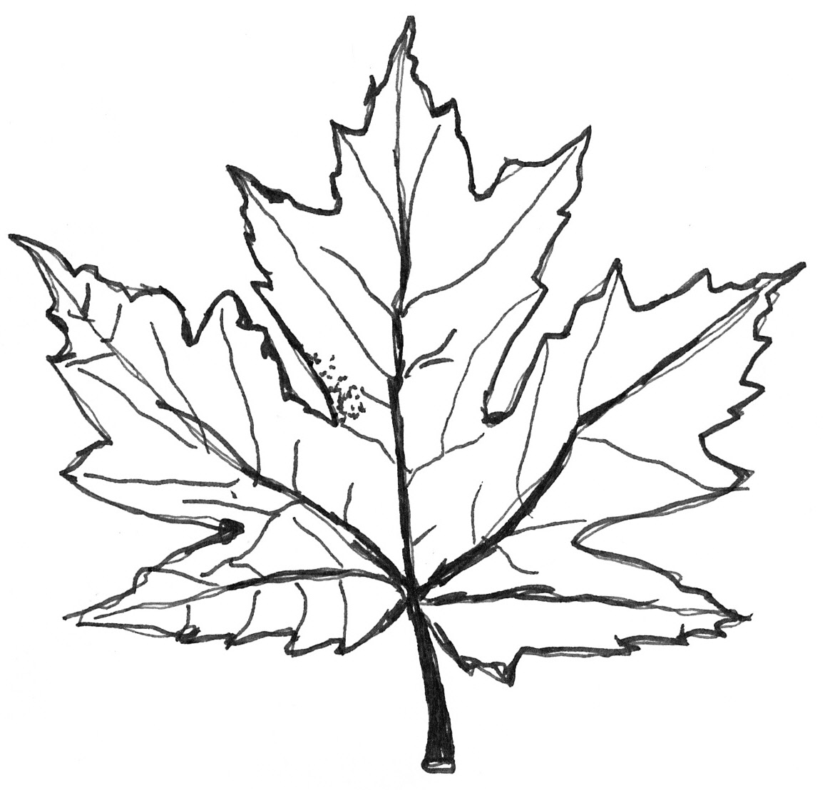 Autumn Leaf Drawing At Getdrawings