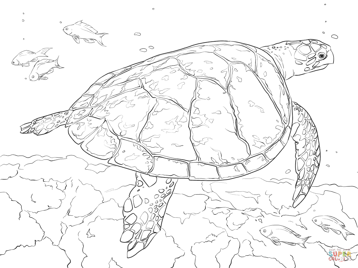 Baby Sea Turtle Drawing At Getdrawings