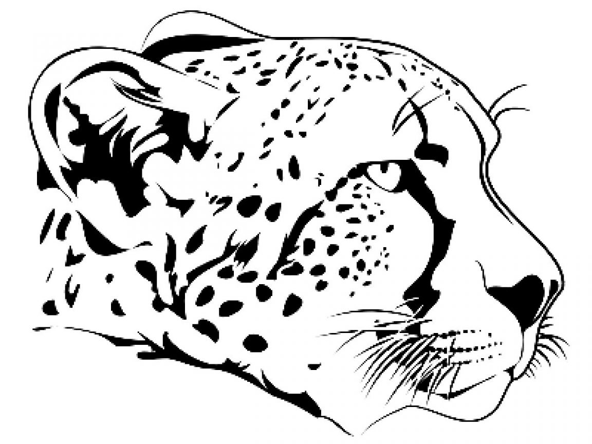 Baby Snow Leopard Drawing At Getdrawings