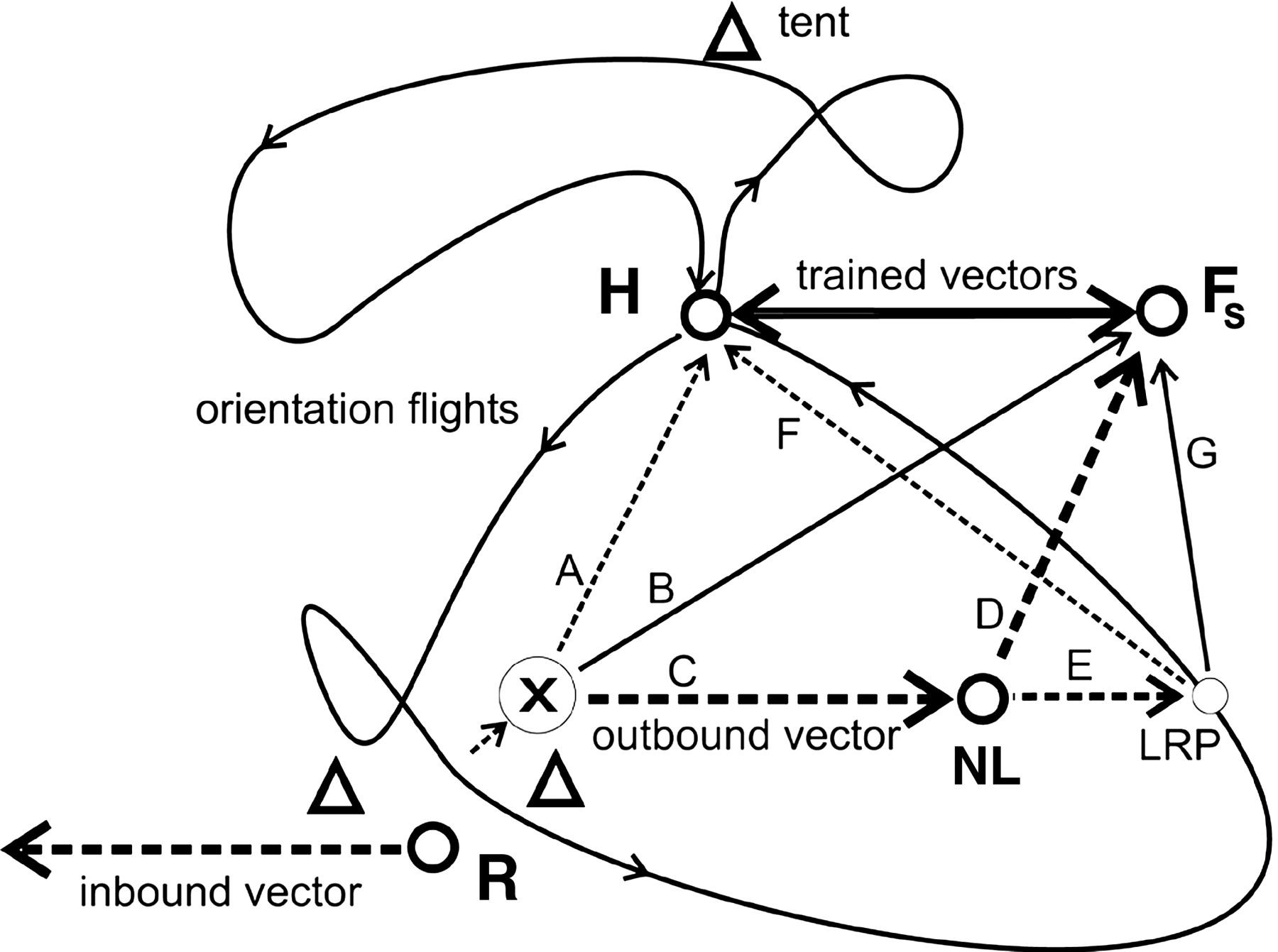 Bee Scientific Drawing At Getdrawings