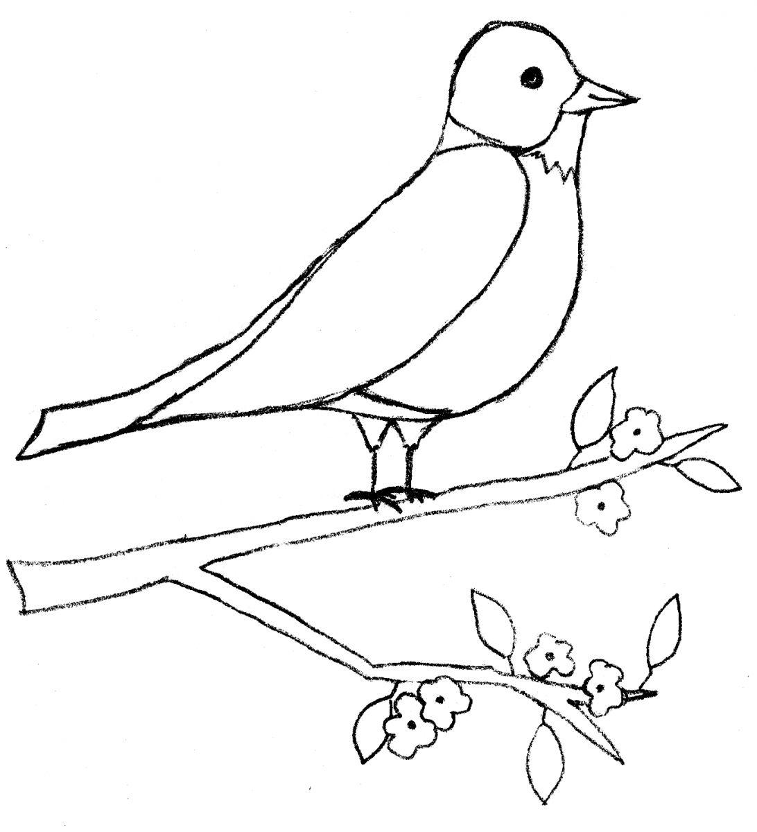 Bird Drawing Images At Getdrawings