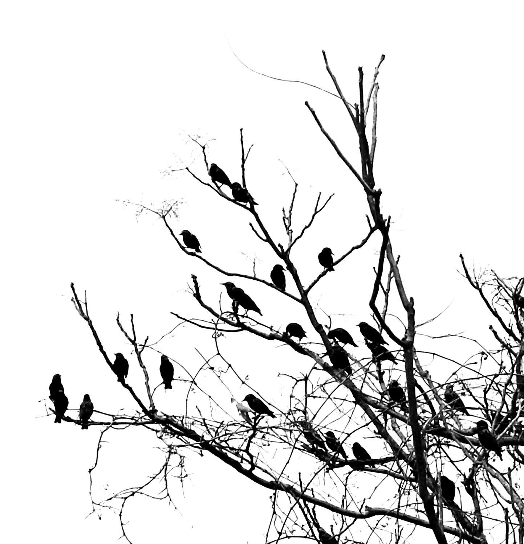 Bird Drawing Wallpaper At Getdrawings