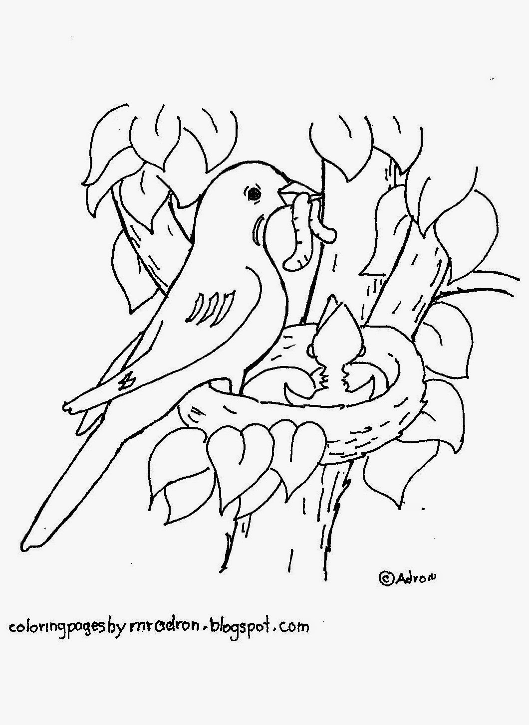 Bird In Nest Drawing At Getdrawings