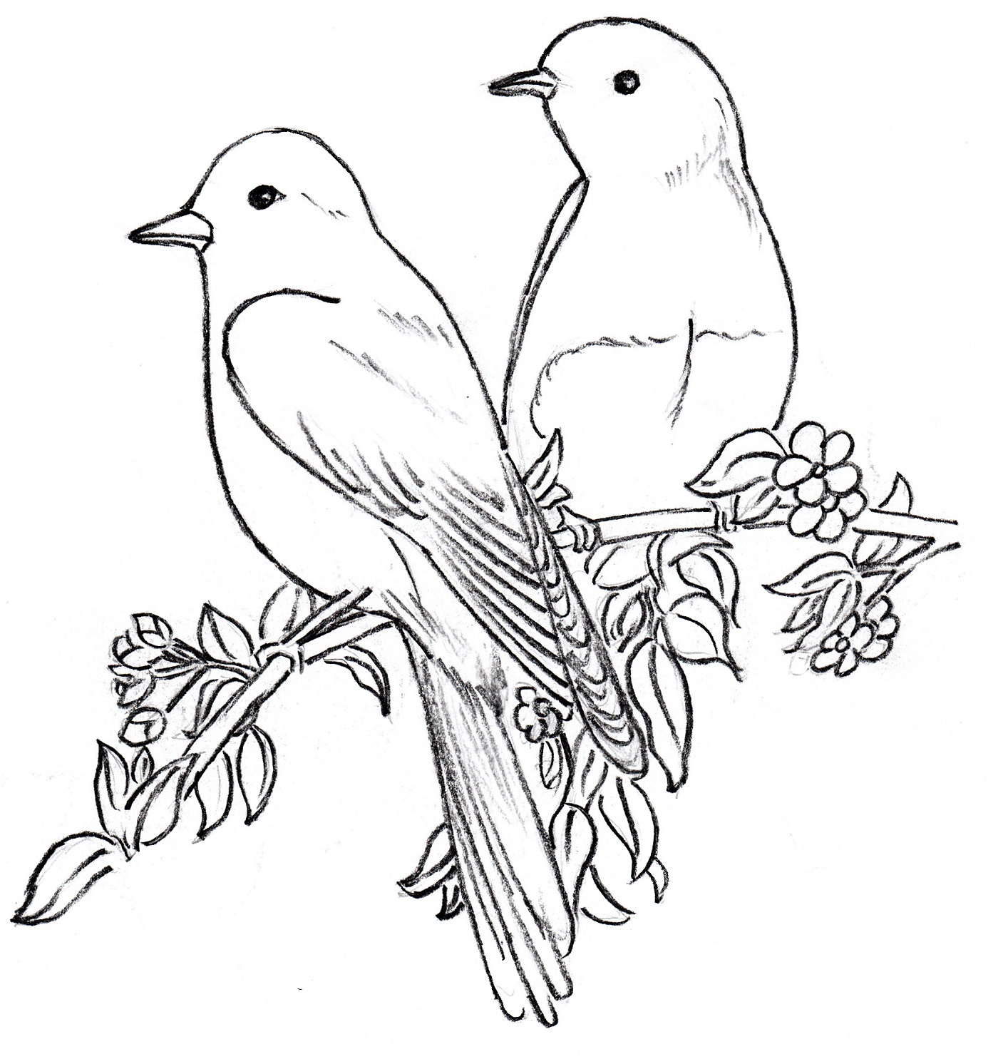 Black And White Bird Drawing At Getdrawings