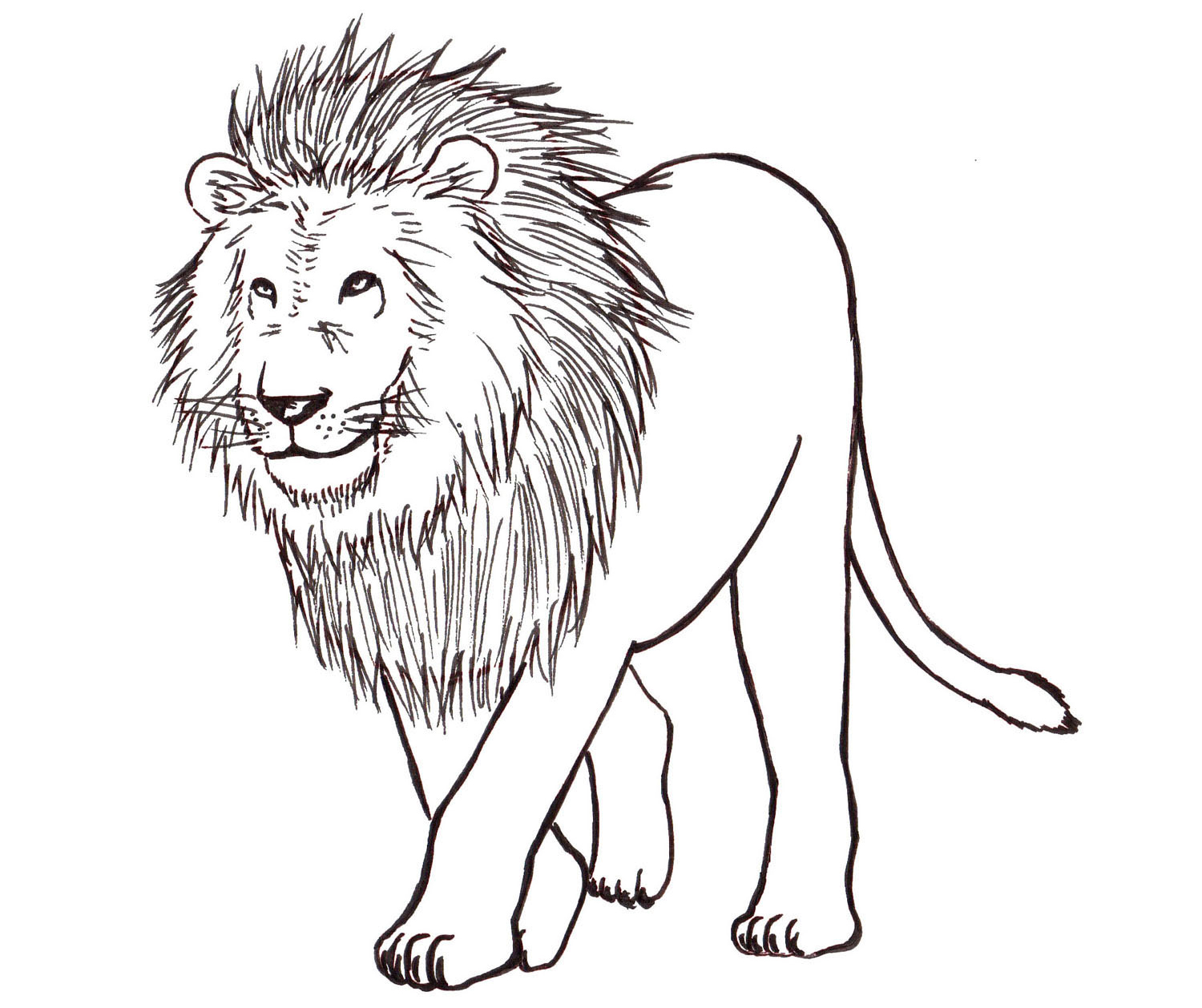 Black And White Lion Drawing At Getdrawings