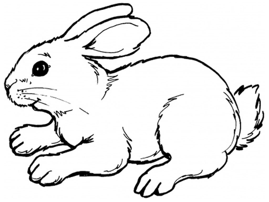 Black And White Rabbit Drawing At Getdrawings