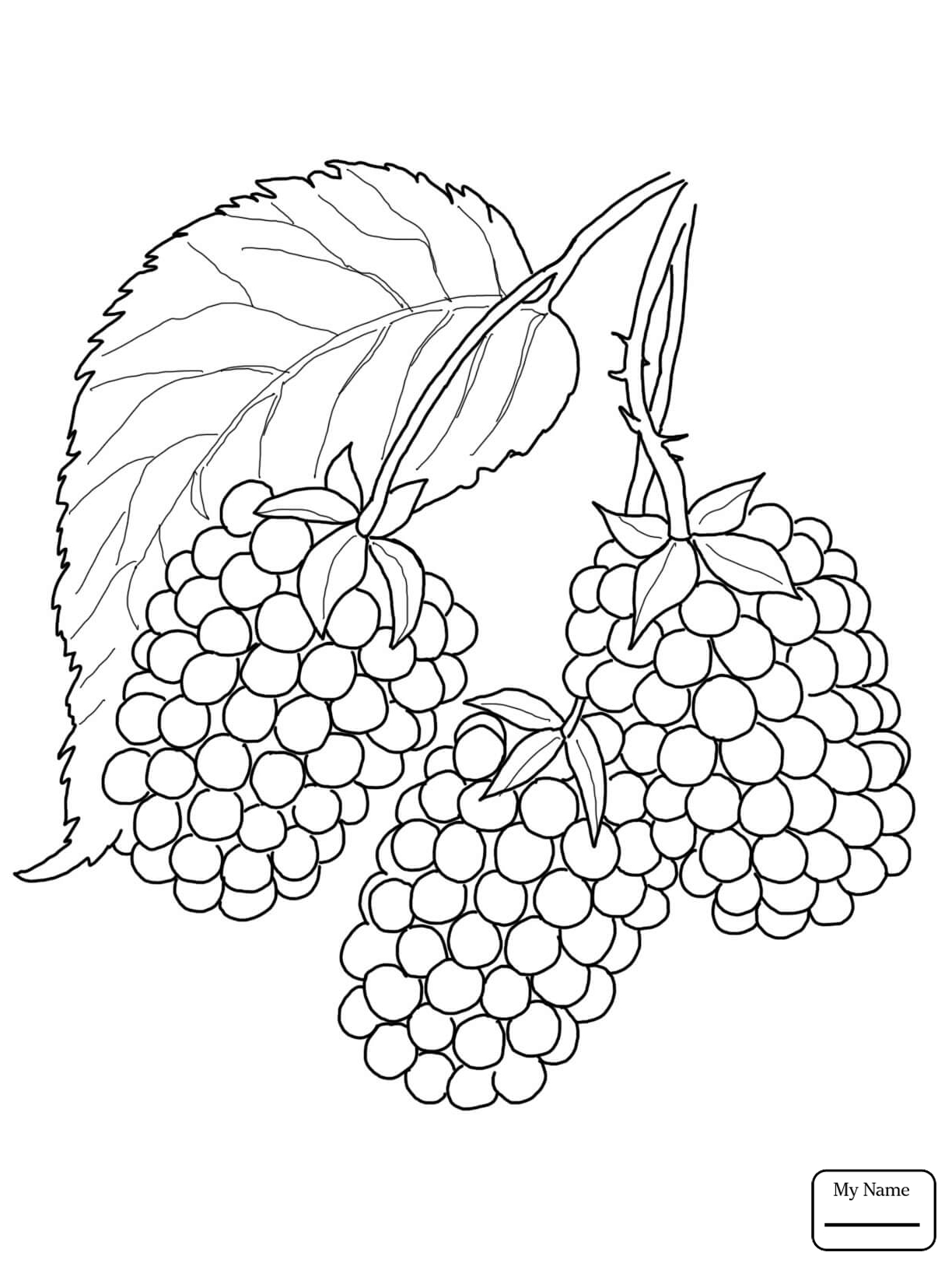 Blackberry Fruit Drawing At Getdrawings