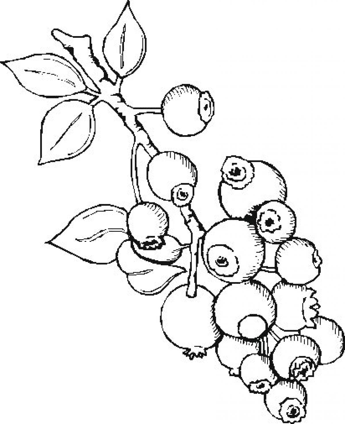 Cozy Blueberries Clipart Black And White Clip Art Images