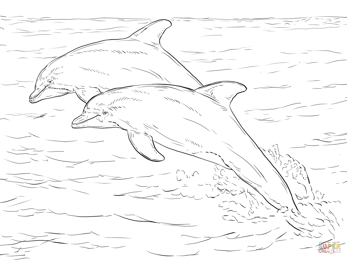Bottlenose Dolphin Drawing At Getdrawings