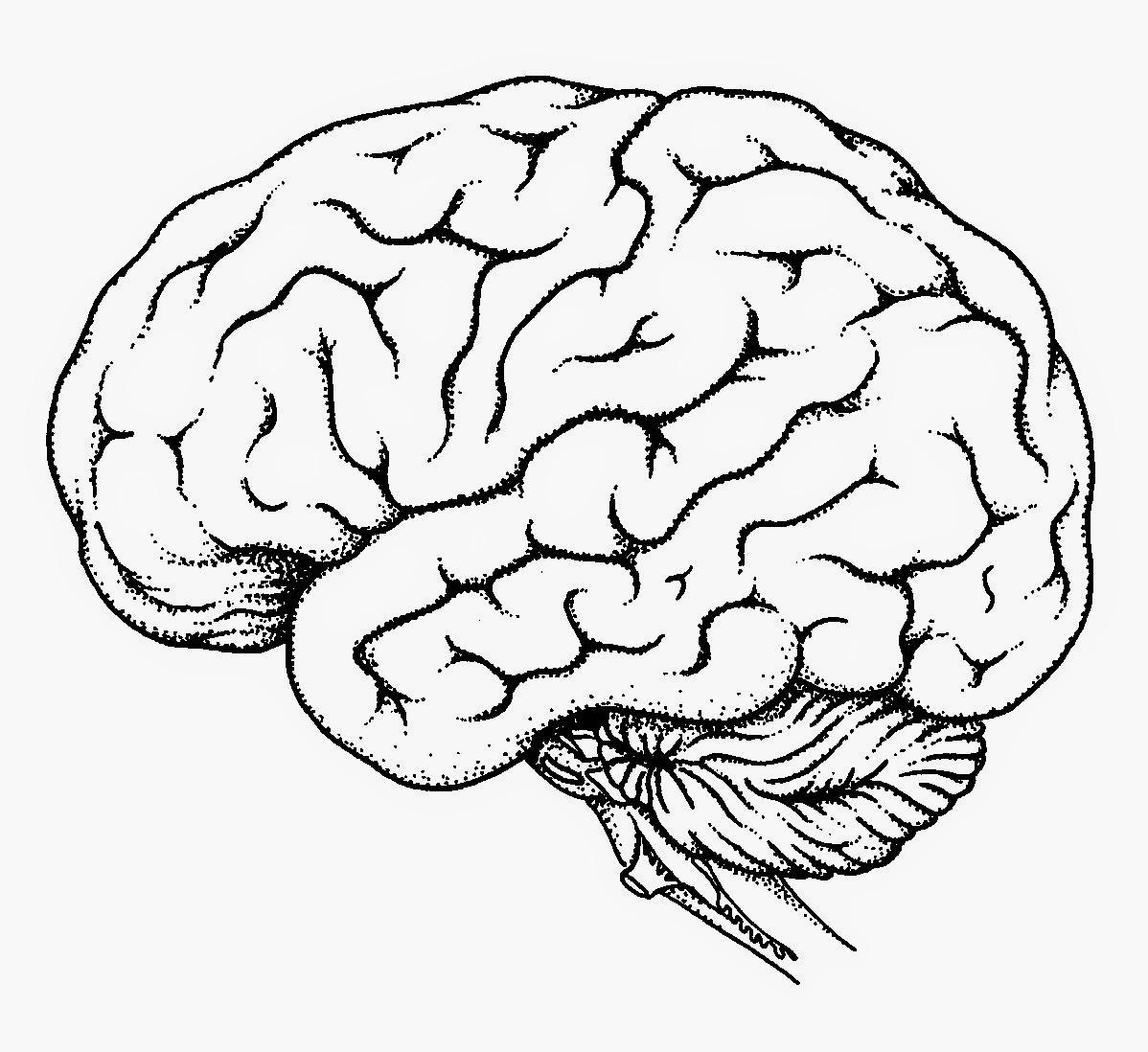Brain Outline Drawing At Getdrawings