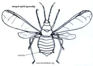 Bumblebee Insect Drawing at GetDrawings | Free for