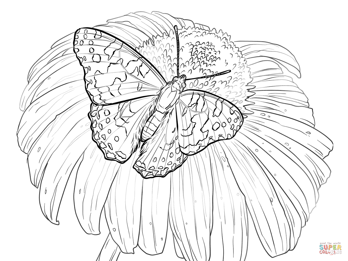 Butterfly And Flower Drawing At Getdrawings