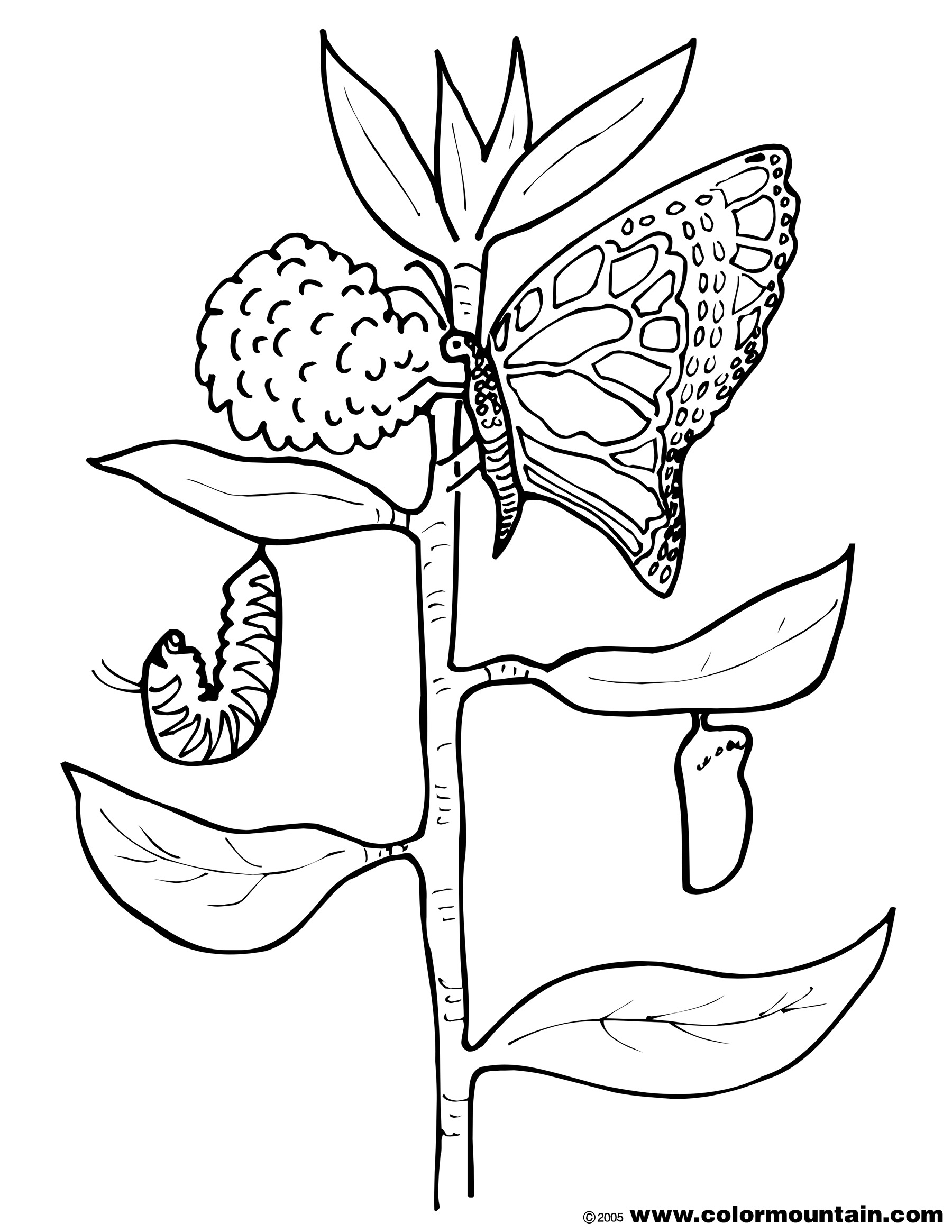 Butterfly Cocoon Drawing At Getdrawings