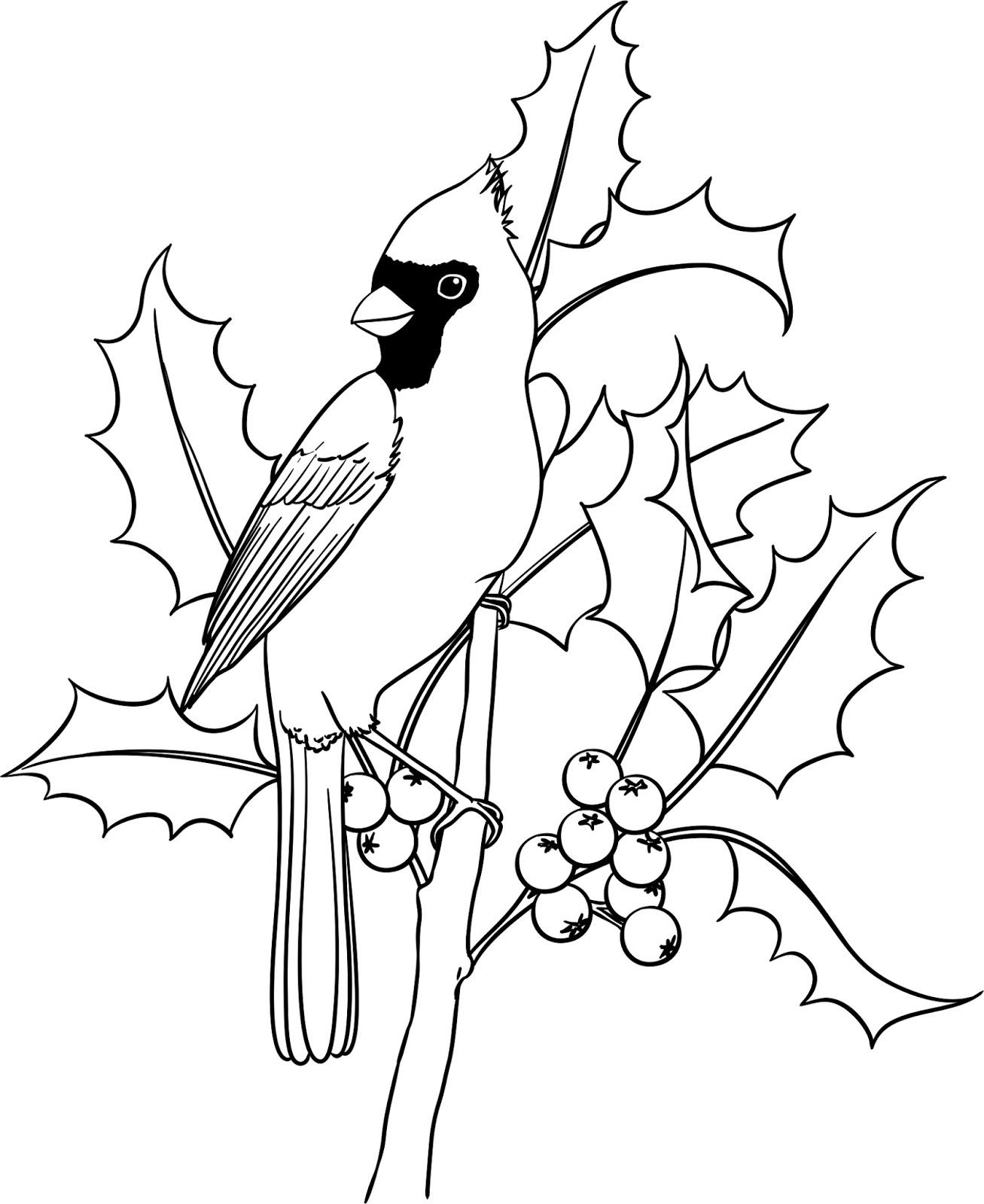 Cardinal Drawing At Getdrawings