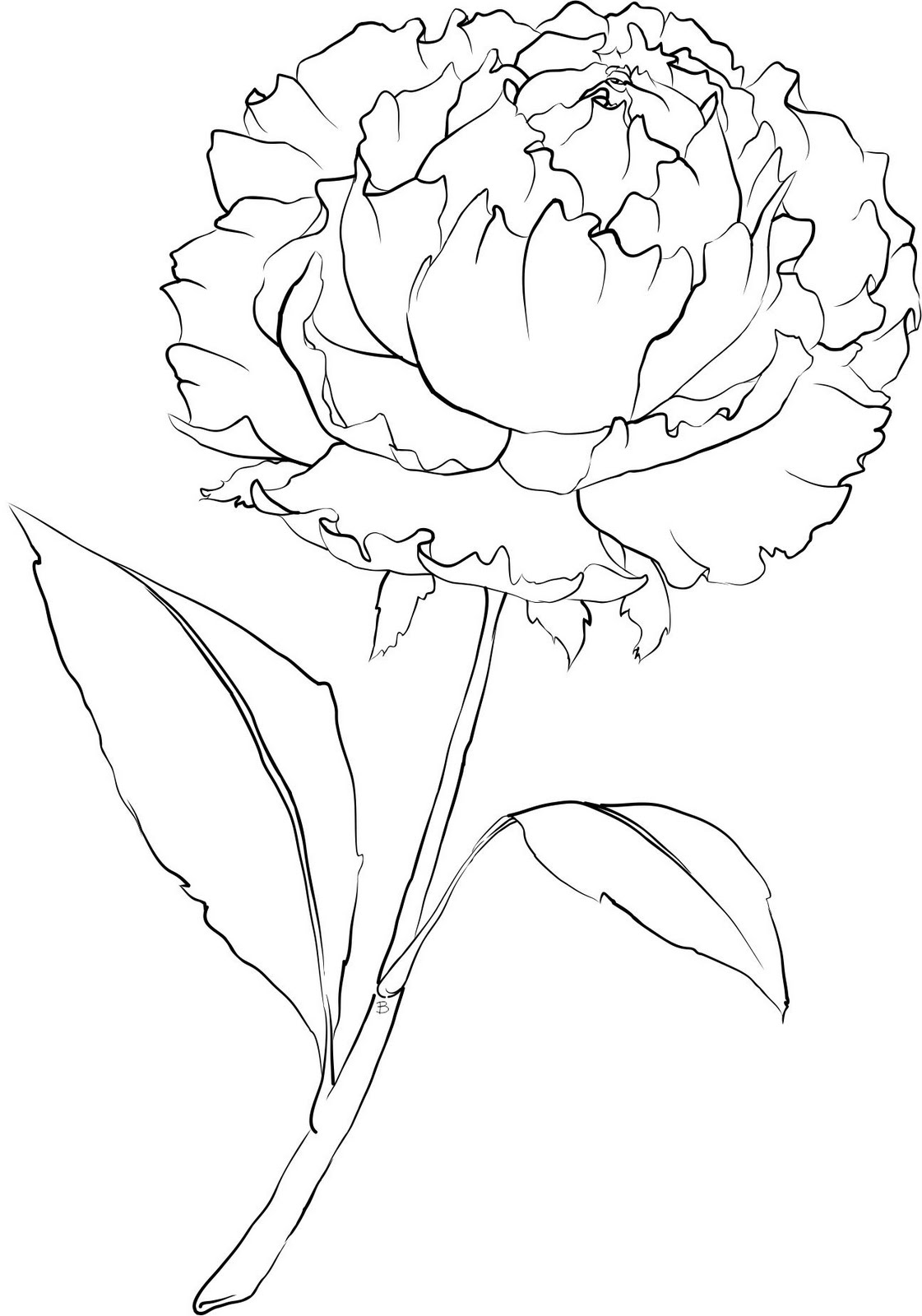 Carnation Drawing Step By Step At Getdrawings