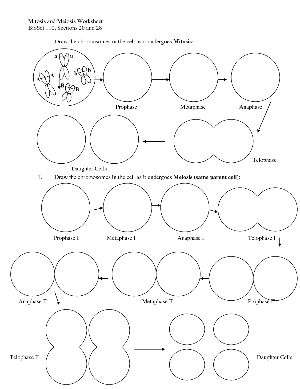 Cell Division Drawing At Getdrawings