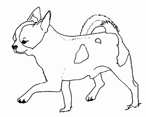 chihuahua drawing at getdrawings  free download