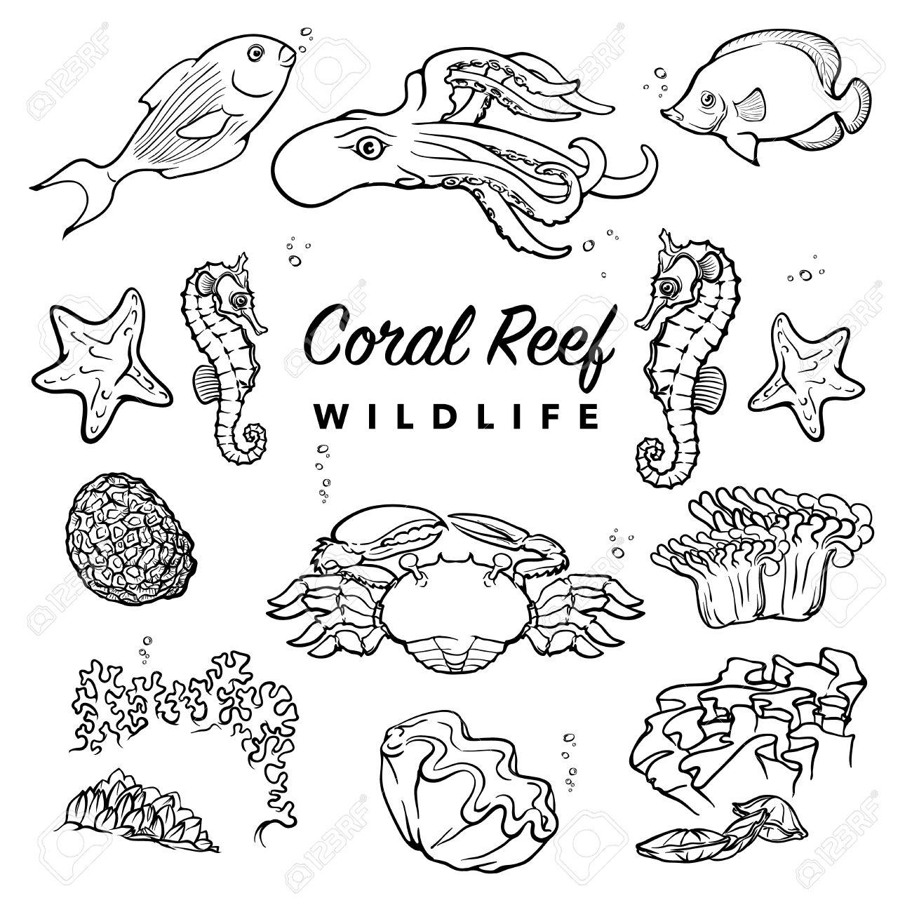 Coral Reefs Drawing At Getdrawings