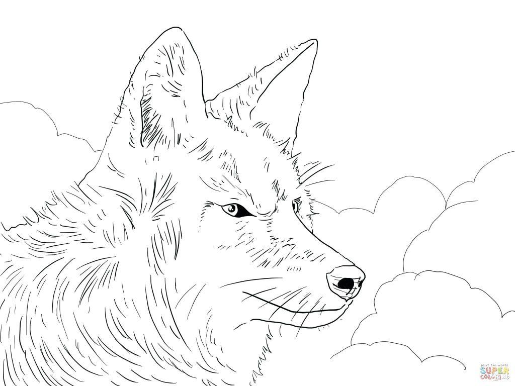 Coyote Head Drawing At Getdrawings