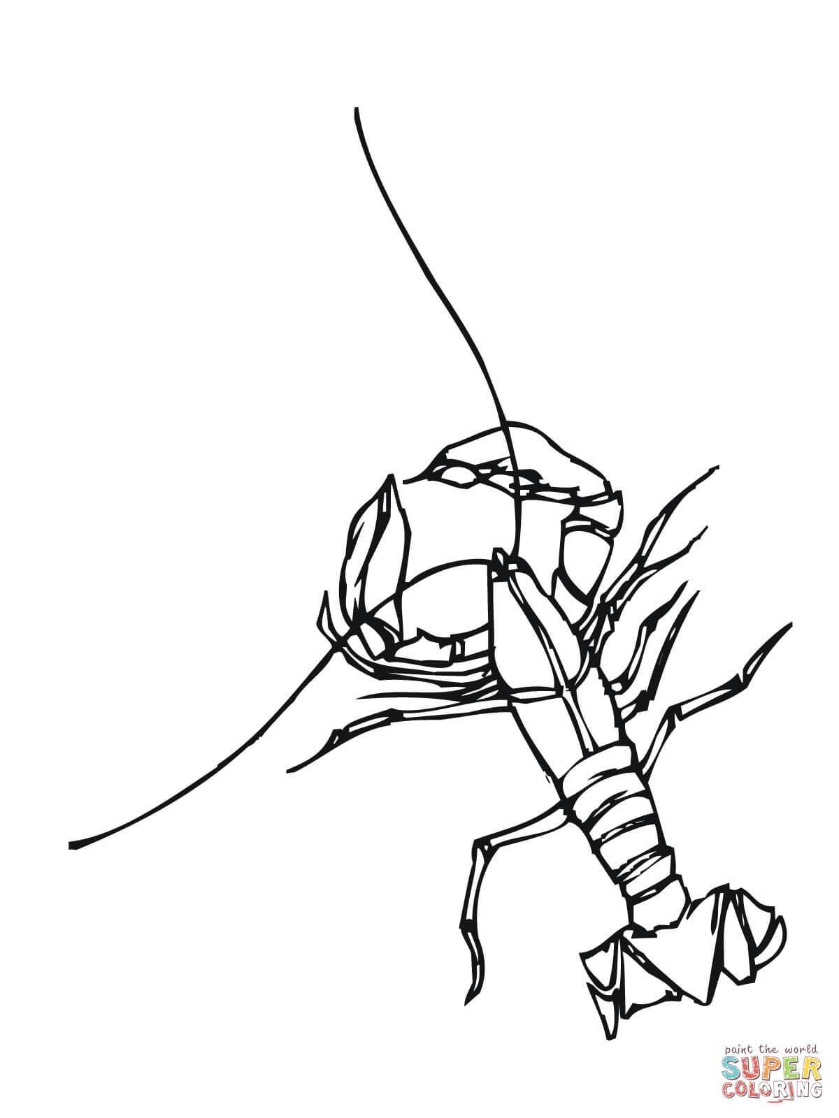 Crayfish Drawing At Getdrawings