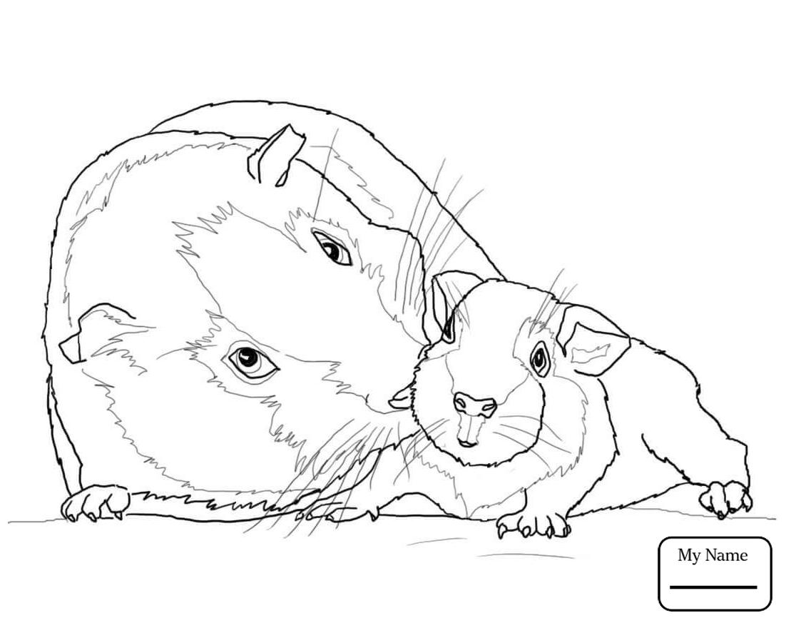Cute Guinea Pig Drawing At Getdrawings