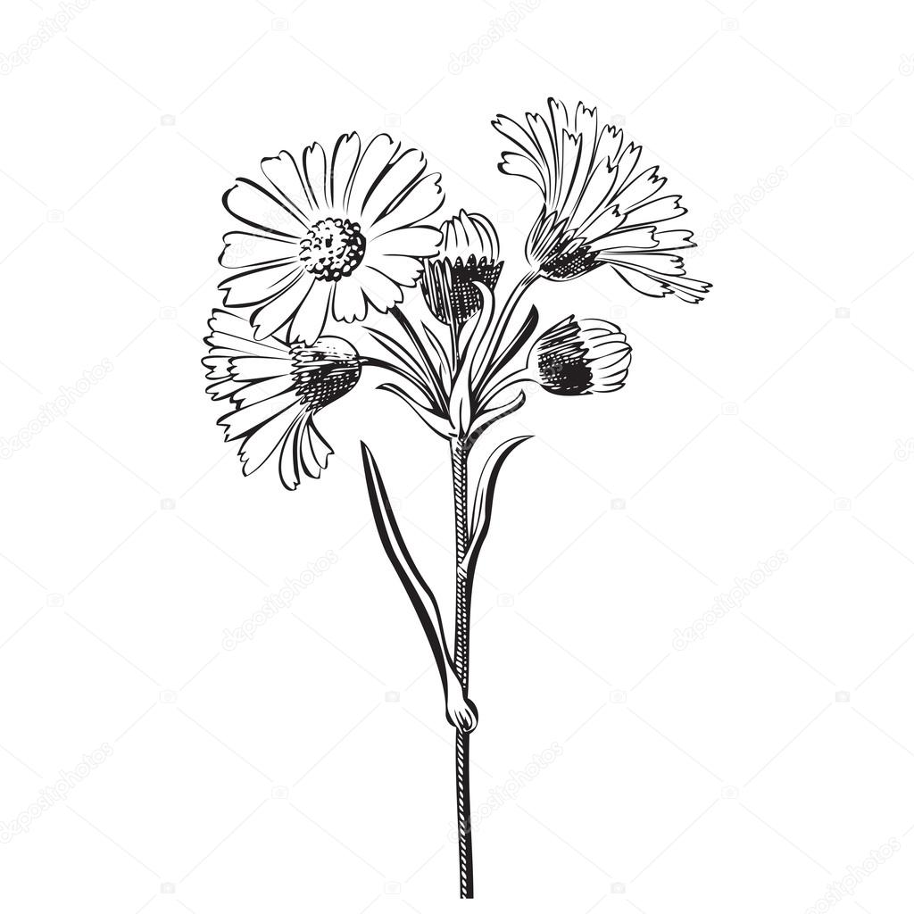 Vintage Flower Bouquet Drawing