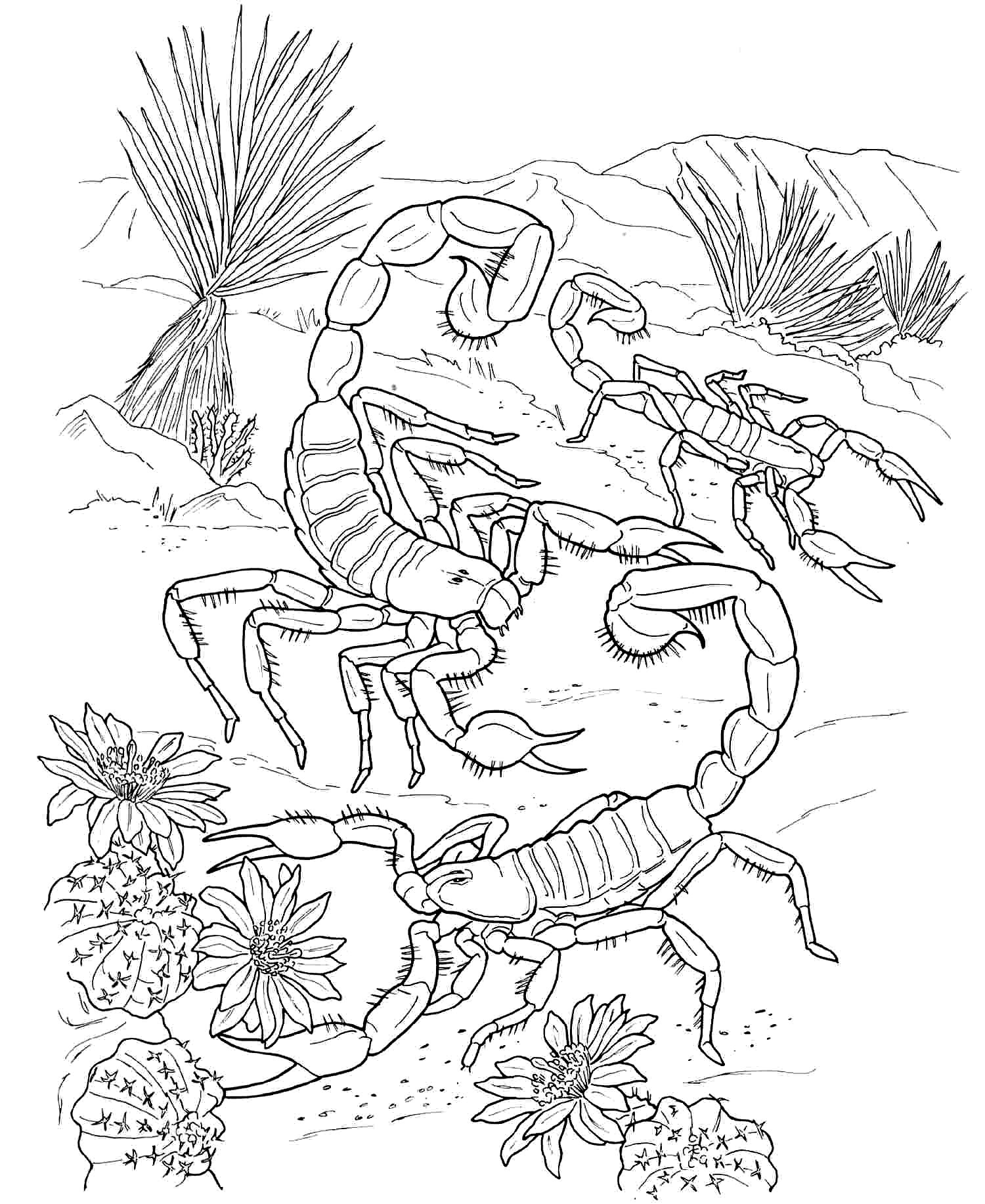 Desert Ecosystem Drawing At Getdrawings