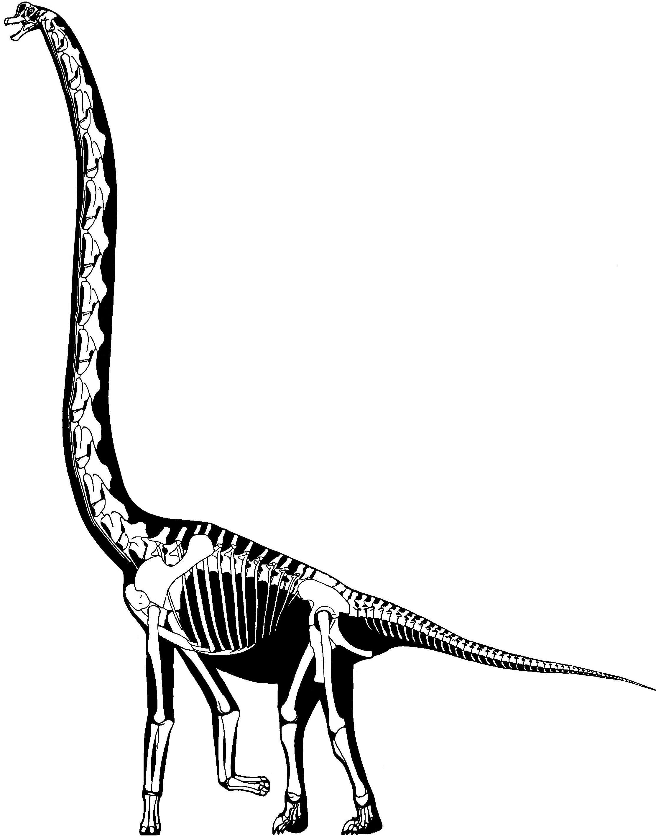 Dinosaur Skeleton Drawing At Getdrawings