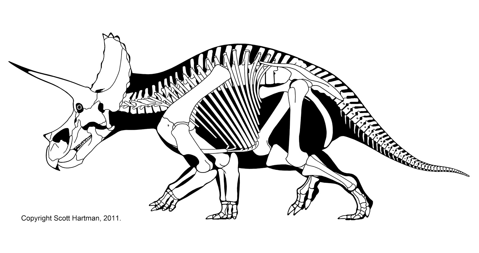 Dinosaur Skeleton Drawing At Getdrawings