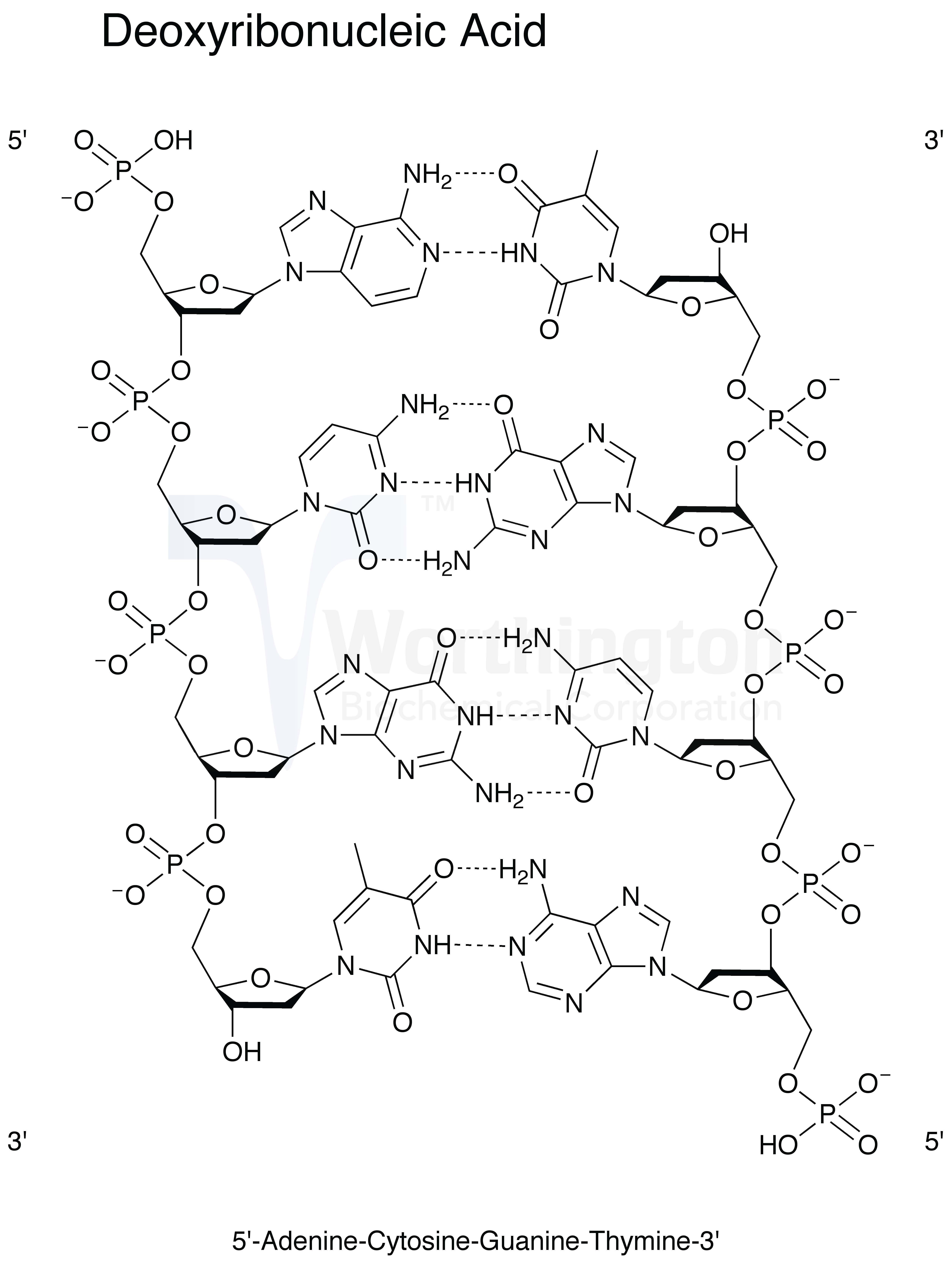 Dna Molecule Drawing At Getdrawings