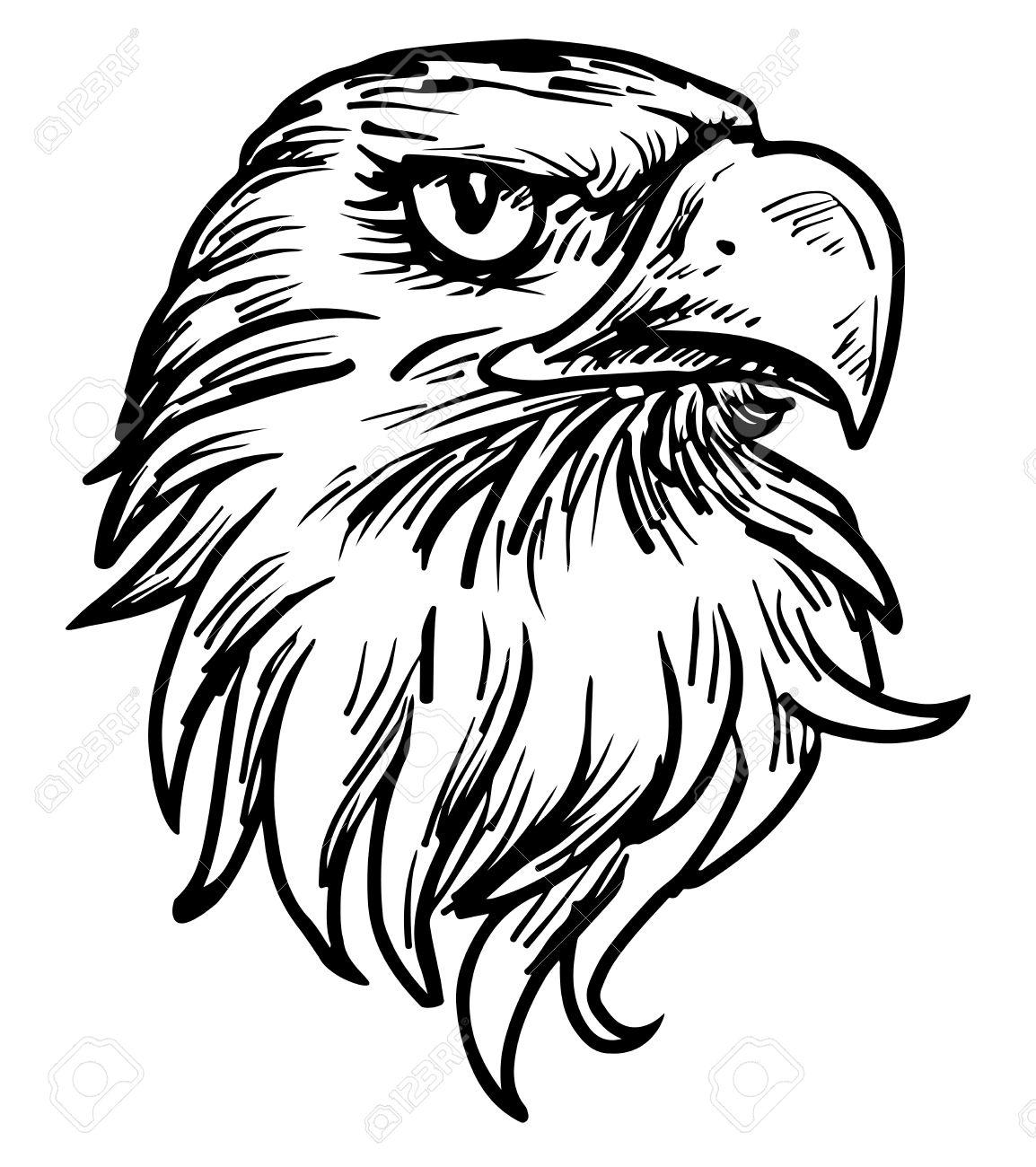 Eagle Head Line Drawing At Getdrawings