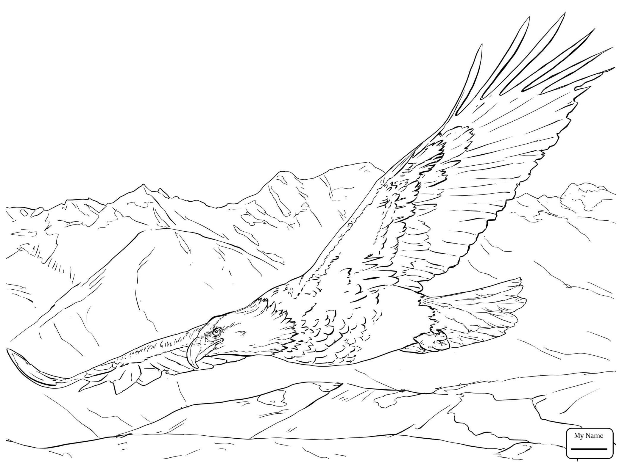 Eagles Flying Drawing At Getdrawings
