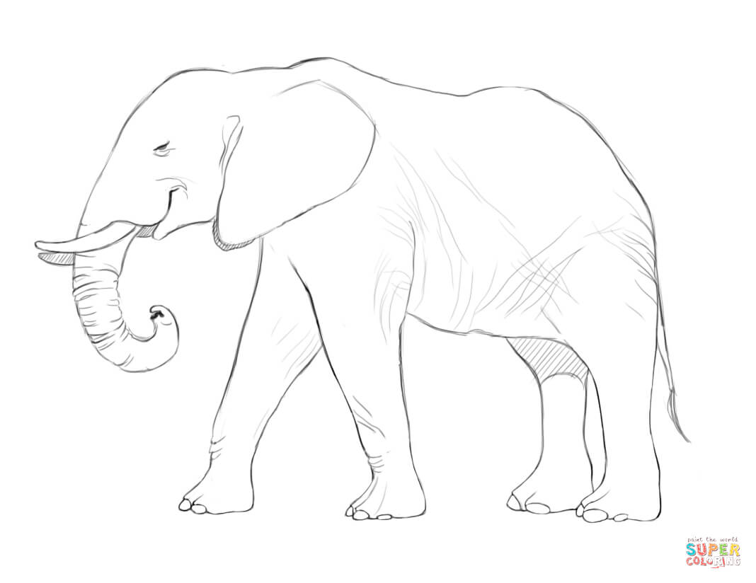 Elephant Images For Drawing At Getdrawings