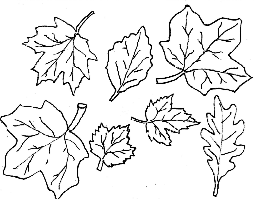 Falling Leaves Drawing At Getdrawings