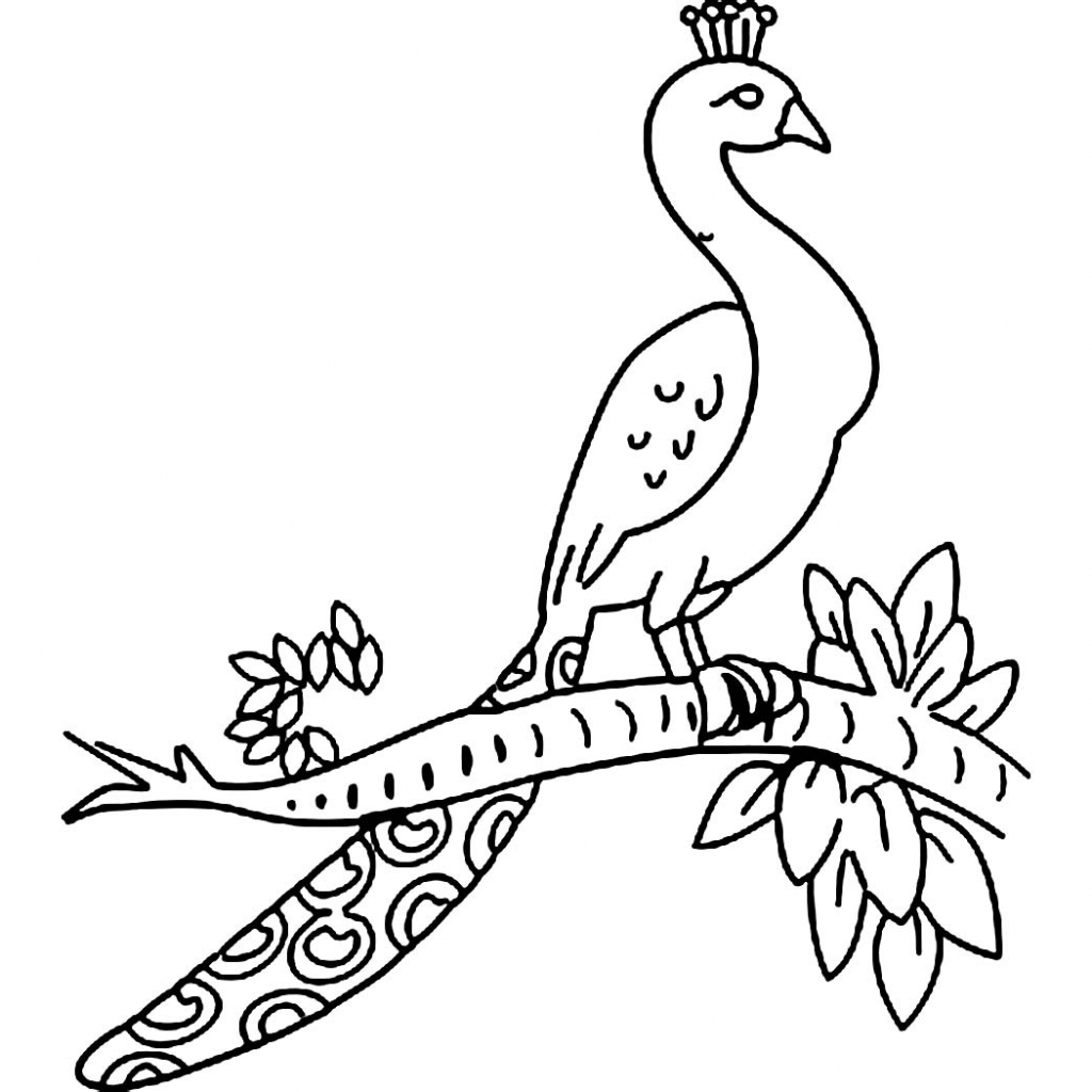 Colored pencil drawings of peacocks wiring diagram database