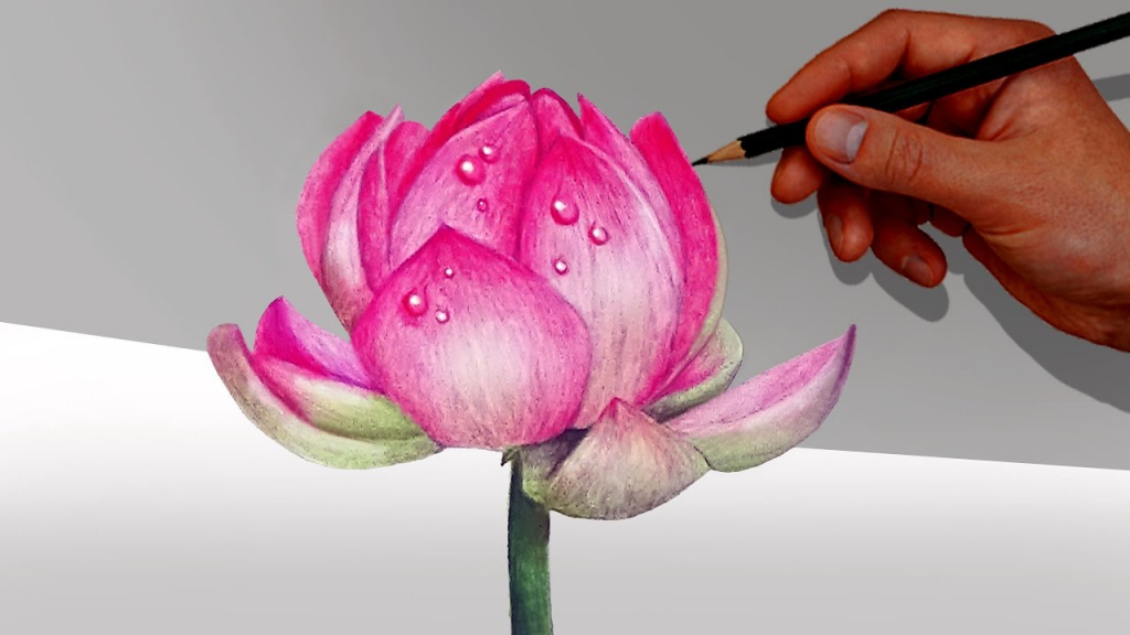 Flower Drawing Images With Colour Kayaflowerco