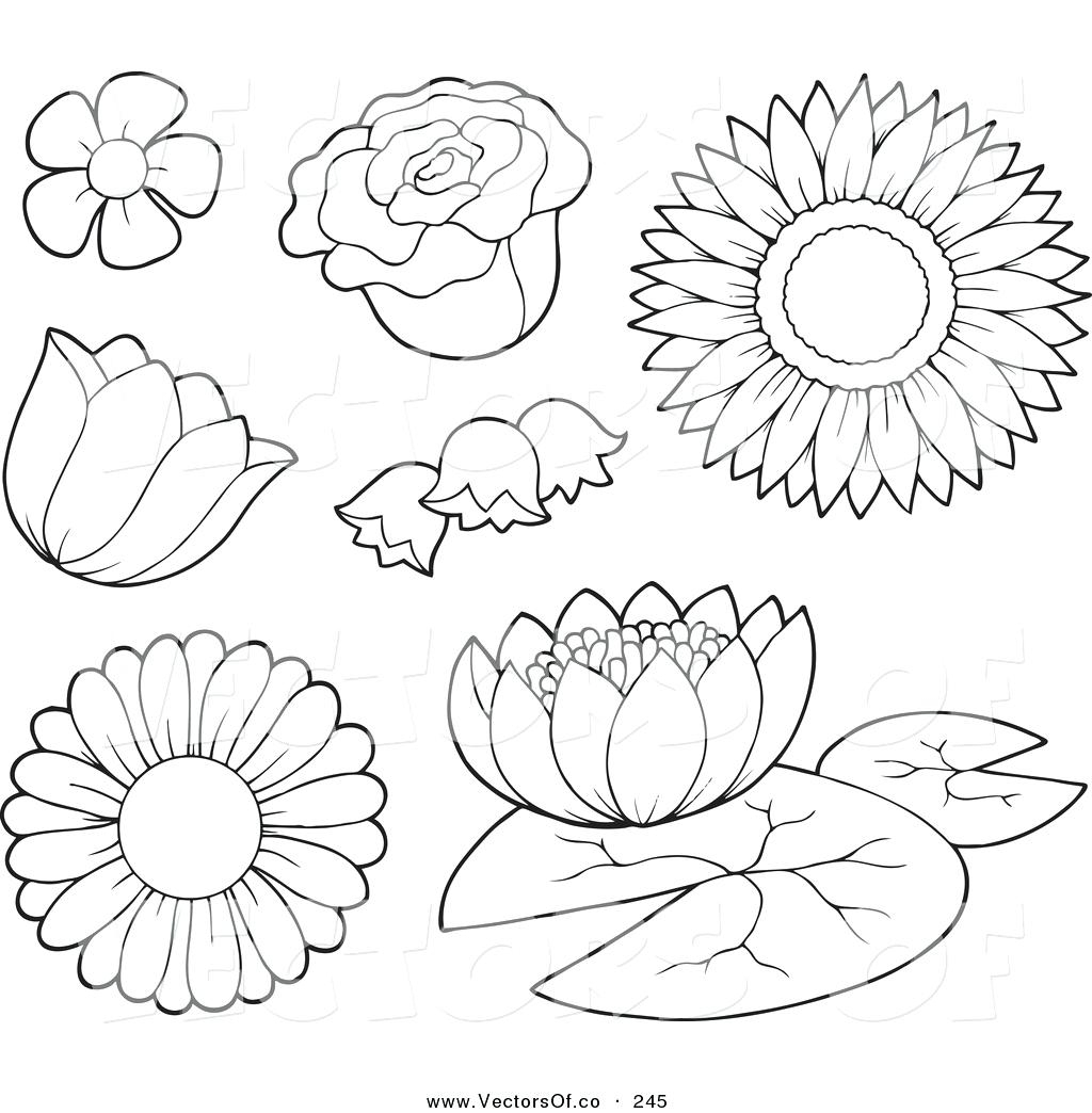 Flowers Outline Drawing At Getdrawings