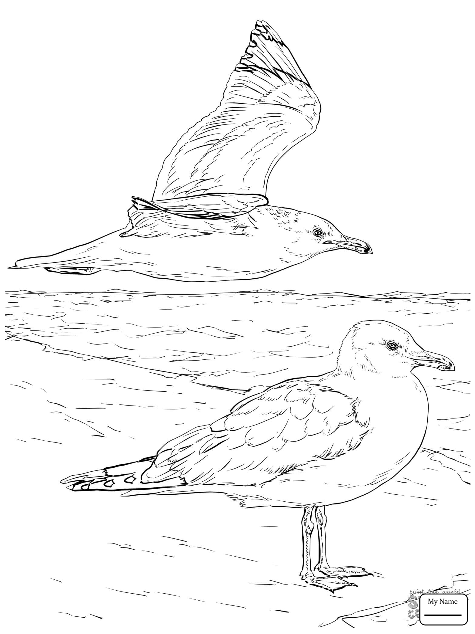 Flying Seagull Drawing At Getdrawings