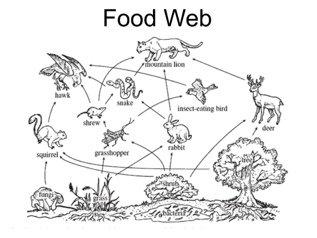 Rainforest Food Web Images