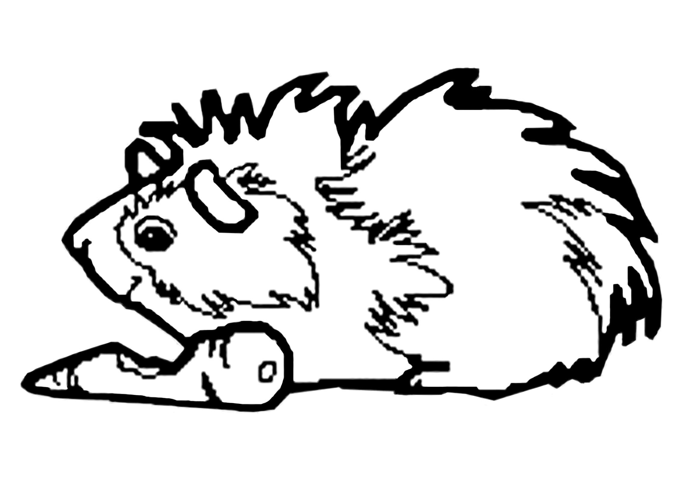 Guinea Pig Cartoon Drawing At Getdrawings