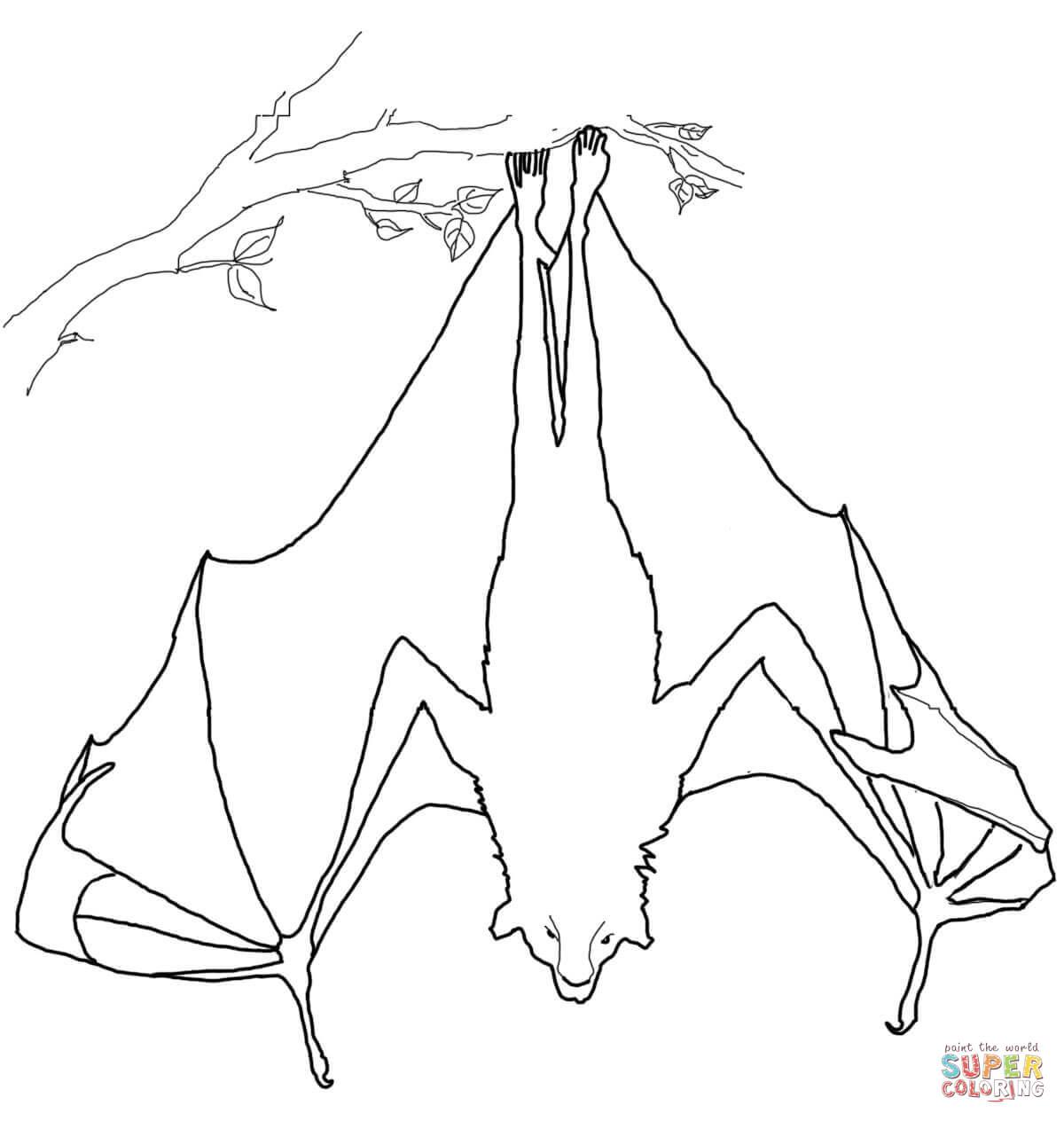 Hanging Bat Drawing At Getdrawings