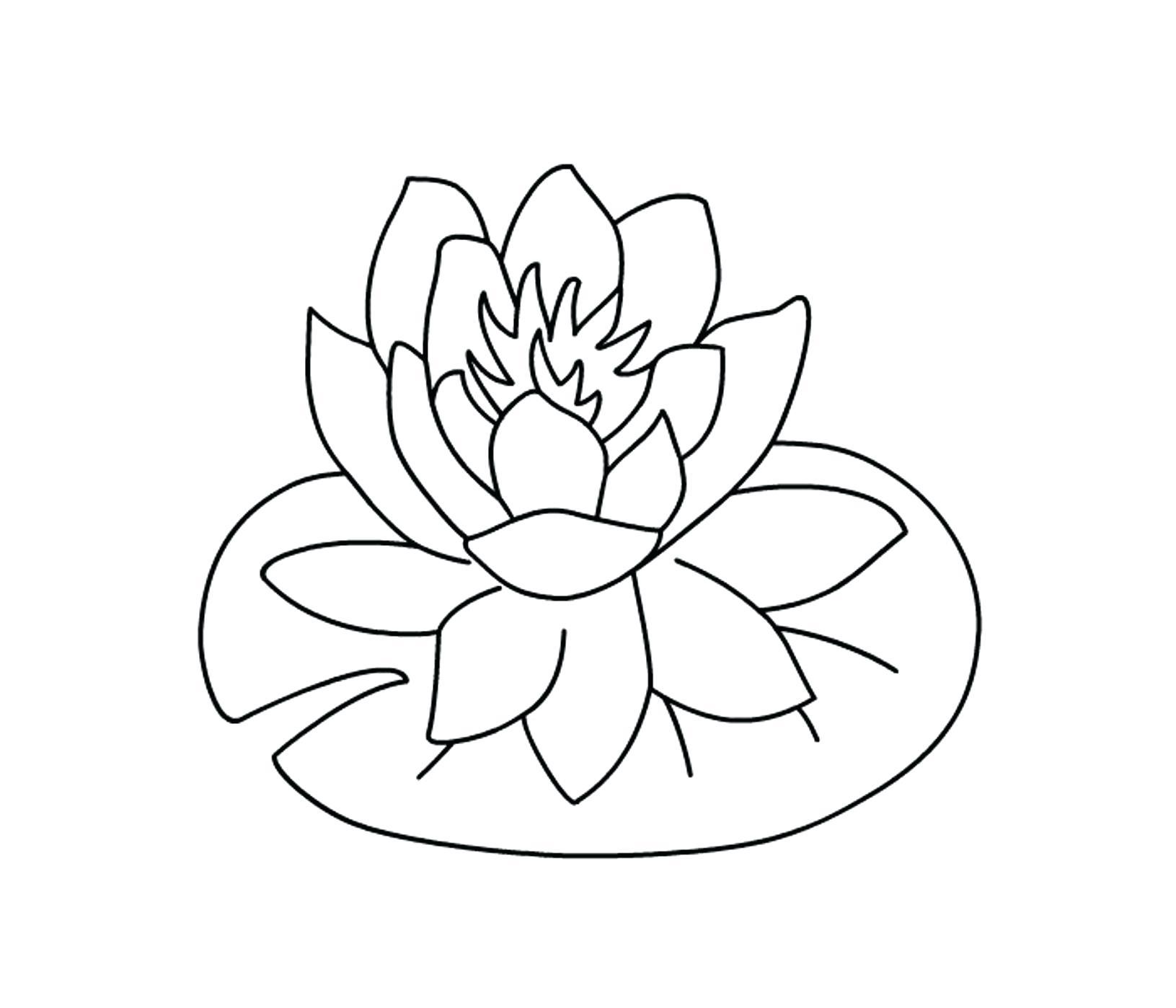 Hawaii Flower Drawing At Getdrawings