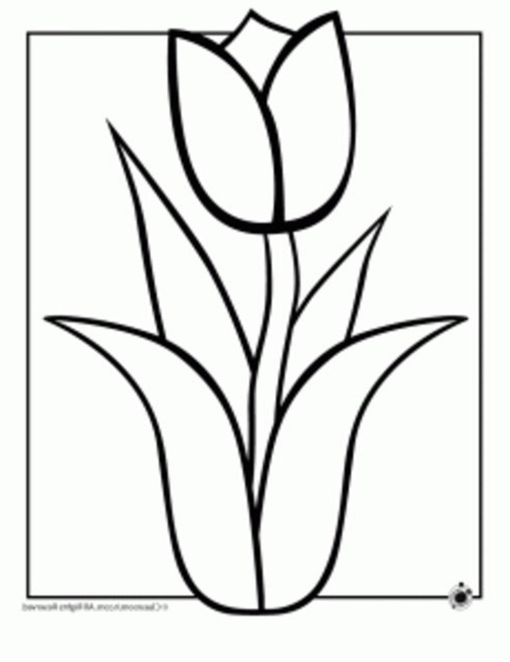 Hawaiian flower plumeria tattoo drawings izmirmasajfo