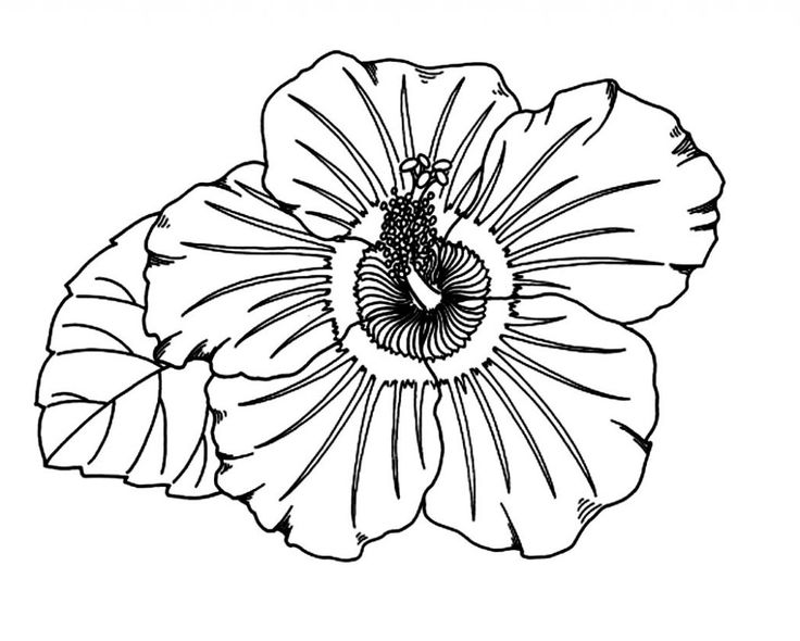 hawaiian flowers drawing at getdrawings  free download